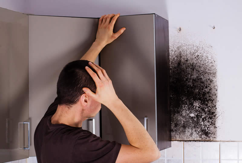 Mold Removal Service at Michigan Restoration Pros