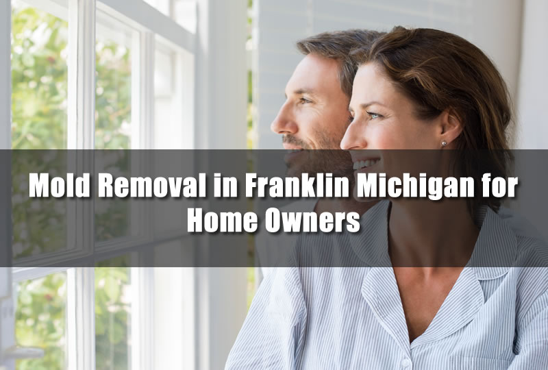 Mold Removal in Franklin Michigan for Home Owners
