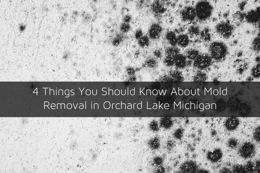 4 Things You Should Know About Mold Removal in Orchard Lake Michigan