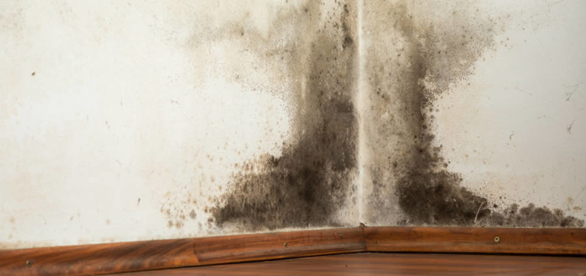 Orchard Lake MI Mold Removal